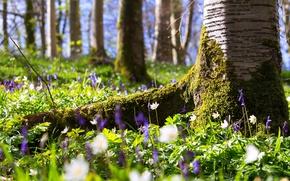 Картинка лето, цветы, дерево