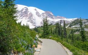 Картинка дорога, зелень, небо, трава, солнце, снег, деревья, цветы, горы, скалы, склон, Вашингтон, США