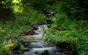 Картинка Природа, Поток, Лес, Nature, Речка, River, Forest, Flow