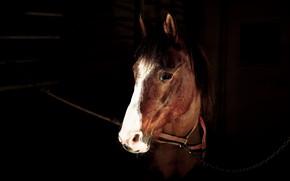 Картинка взгляд, морда, темнота, конь, лошадь, портрет, цепь, черный фон, коричневая, челка, стойло