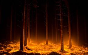 Картинка лес, свет, ночь