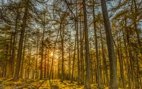 Картинка Природа, Деревья, Лес, Лучи Света, Ствол Дерева