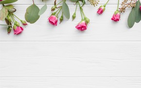Картинка листья, цветы, розы, розовые, бутоны, wood, pink, flowers, beautiful, roses