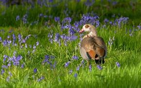 Картинка цветы, птица, утка