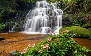 Картинка лес, река, водопад, forest, river, landscape, jungle, beautiful, waterfall, tropical