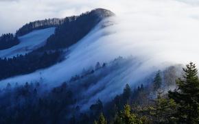 Картинка зима, лес, солнце, снег, деревья, туман, гора, Швейцария, Belchenflue