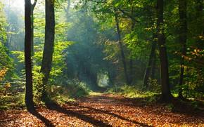Обои тропинка, парк, солнце, деревья, осень, лес, листья