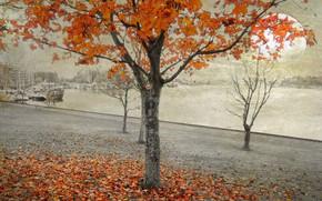 Картинка осень, листья, деревья, город, коллаж, дома, Луна, набережная