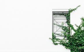 Картинка зелень, листья, стена, минимализм, текстура, окно, решётка, вьюн, штукатурка, плющ