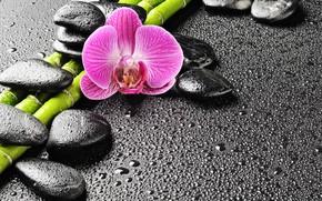 Картинка капли, камни, бамбук, орхидея