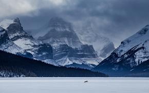 Картинка лес, горы, озеро, волк, Канада