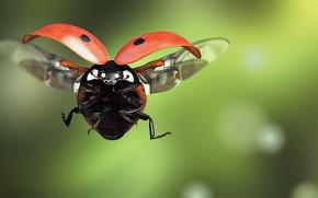 Обои Ladybird, полёт, арт, насекомое, божья коровка, monteillard-damien