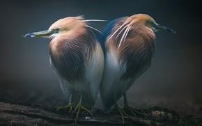 Картинка птицы, сон, пара, бревно