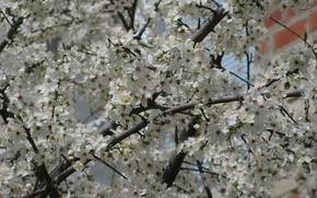Картинка ветки, дерево, много, апрель, весна 2018, mamala ©