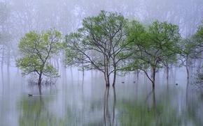 Обои весна, река, вода, дымка, утки, деревья, туман, природа, утро