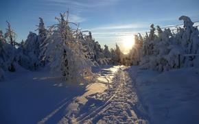 Картинка зима, лес, свет, снег, утро