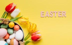 Картинка цветы, весна, colorful, Пасха, тюльпаны, flowers, tulips, spring, Easter, eggs, decoration, Happy, яйца крашеные