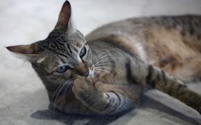 Картинка глаза, кот, лапка, котейка