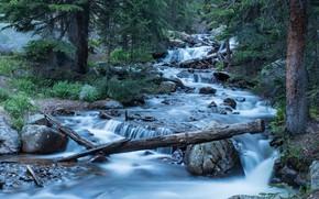 Картинка лес, река, Колорадо, каскад