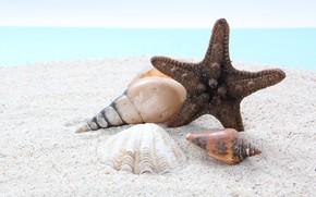 Картинка песок, море, пляж, Природа, ракушки, морская звезда