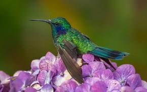 Картинка цветок, птица, клюв, крошечный колибри