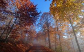 Картинка дорога, осень, утро, туман
