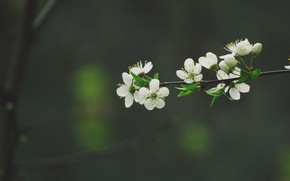 Картинка цвет, ветка, весна