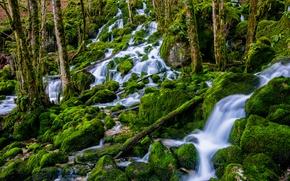 Картинка лес, вода, мох, поток