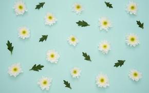 Картинка цветы, flowers, petals, decoration, green leaf