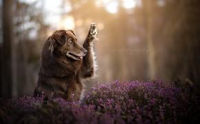 Обои друг, природа, собака
