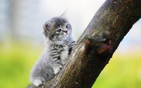 Обои дерево, котенок, фон, малыш