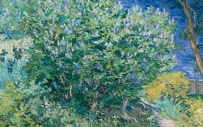 Обои Vincent Willem van Gogh, картина, Винсент ван Гог, пейзаж, Куст Сирени