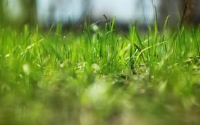 Картинка природа, весна, травка
