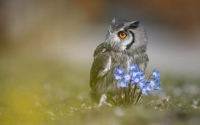 Картинка животные, взгляд, цветы, природа, фон, сова, птица, портрет, размыто, филин
