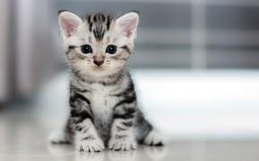 Картинка котенок, маленький, пушистик
