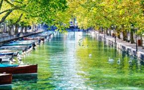 Картинка лодки, канал, лебеди, France, Annecy