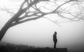 Картинка misty, tree, solitude, loneliness, branches, person, foggy, gloomy, desolation