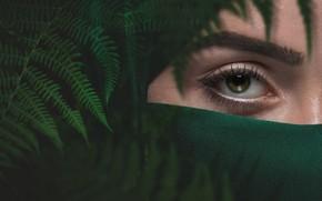Картинка девушка, зеленый, глаз, папоротник, бровь