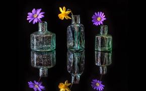 Обои лепестки, натюрморт, графин, отражение, стекло, бутылка, цветы