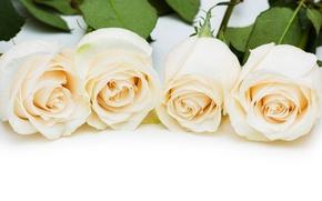 Картинка букет, бокалы, white, белые розы, flowers, roses