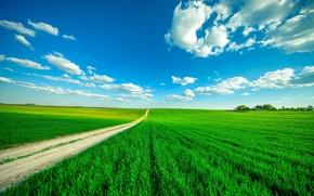 Картинка дорога, зелень, поле, небо, трава, облака