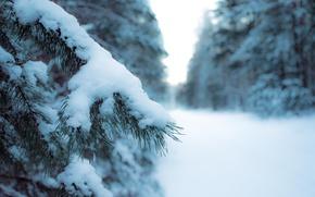 Картинка лес, снег, деревья, новый год, ель