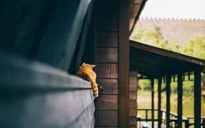 Картинка кот, рыжий, хвост