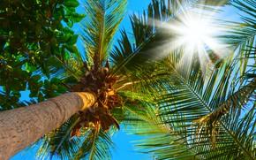 Картинка небо, листья, солнце, ветки, пальмы, верхушки