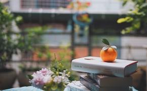 Картинка цветы, улица, книги, апельсин