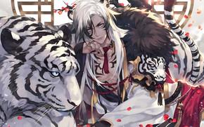 Картинка тигр, парень, белый тигр