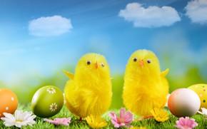 Картинка цветы, праздник, цыплята, яйца, пасха, травка