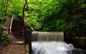 Картинка зелень, лес, деревья, водопад, лестница, США, Spring Mill State Park