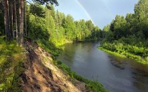 Картинка лес, радуга, сосны, речка