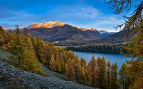 Картинка осень, лес, деревья, горы, озеро, Альпы, Switzerland, Alps, Щвейцария, Lake Sils, Озеро Зильс, Piz Corvatsch, …